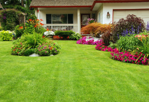 The Best Types Of Grass For Your Decatur Landscape Designs